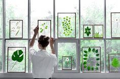 Dekoration mit Pflanzen - FRAMES Glasrahmen von moebe für Blumen und Pflanzen - Blumen und Blätter in Bilderrahmen