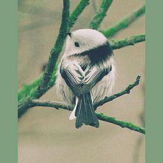 Una Pequeña ave  Que da curiosidad sobre que estará mirando