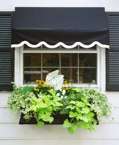 Window Box Contest Entry My Kitchen window box (patio arrangement ideas potato vines) Window Planters, Window Boxes, Planter Boxes, Patio Arrangement Ideas, Potato Vines, Asparagus Fern, Pot Plante, Container Flowers, Kitchen Wall Art