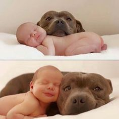 My First grand baby will probably be with a pitbull or a Dane! Newborn And Dog, Dog Baby, Newborn Animals, Newborn Pics, Newborn Pictures, Newborn Babies, Newborn Shoot, Baby Animals, Animals And Pets