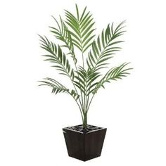 Artificial Growth PR-86000 - 6.5 Foot Fire Retardant Kentia Palm Tree - Green. Artificial Growth is a leading manufacturer of Artificial plants trees and floral components for the Interior and Exterior Landscape Industry.Artificial Kentia Palm TreeSilk Polyester FoliageHeight - 6.5 feet7 green frondsFire RetardantPlanters and potting material for fake plants are not included.