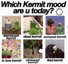 "We've curated a selection of "" Top 15 Funny Kermit Memes "" because these will make you more fun. Discover more hilarious memes here. Funny Kermit Memes, Funny Relatable Memes, Relatable Posts, Life Memes, Dankest Memes, You Funny, Hilarious, Funny Things, Funny Stuff"
