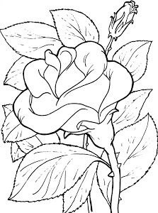 coloring page - Free Printable Coloring Pages Coloring Book Pages, Coloring Pages For Kids, Free Coloring, Flower Pictures, Colorful Pictures, Flower Images, Printable Coloring Sheets, Printable Flower Coloring Pages, Pyrography