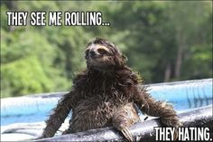<b>The Internet loves sloths and so should you.</b>