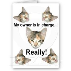 Cat in Charge Card