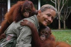 Lone Drøscher Nielsen, who dedicated the past decade to the rescue and rehabilitation of Borneo's endangered orangutans through the Nyaru Menteng Orangutan Rehabilitation Centre, recently received a certificate of appreciation from Indonesia's Office of the Directorate General of Forest Protection and Nature Conservation (PHKA). Over 600 orphaned orangutans currently reside at Nyaru Menteng in Central Kalimantan. For more.