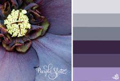 Color Palette: Purples & Grays