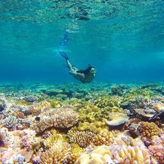 From the Great Barrier Reef, Australia: mermaid life. | 39 Instagrammers Share Their Favourite Travel Photos For World Tourism Day