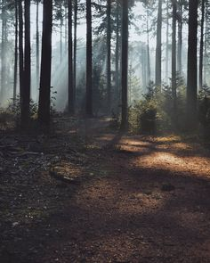 The fog of the forest Scenic Photography, Amazing Destinations, Science And Nature, The Great Outdoors, Wilderness, Scenery, Adventure, Landscape, Location Scout
