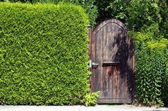 10 WAYS TO STAY PRIVATE WITHOUT A FENCE - http://www.gardenpicsandtips.com/10-ways-to-stay-private-without-a-fence/