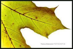 img by Thomas Bekemeier on 500px