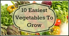 10 Easiest Vegetables To Grow At Home