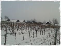 Gelber Muskateller im Winterschlaf, die Öhlberg-Kellergasse im Hintergrund. Pillersdorf im Weinviertel, Österreich