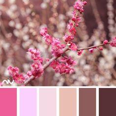 Spring (flora)
