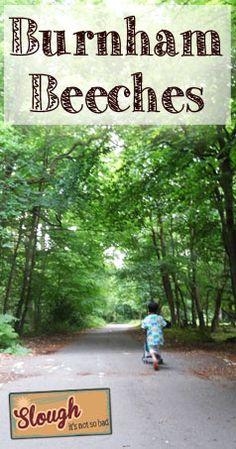 Burnham Beeches - Woodlands in Slough