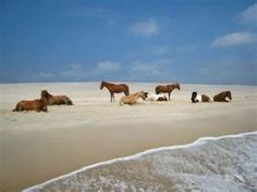 Chincoteague Island in Virginia - camped in the sand on this island for a week; would fall asleep listening to the crashing of the ocean waves