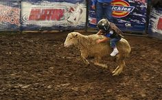 Mutton busting is awesome and if you have children, you should have them try it. | Why Your Child Should Try MuttonBusting