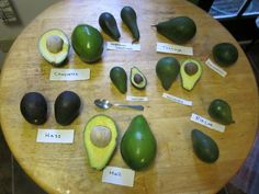 Hass - Facts About Florida Avocado You Should Know - EnkiVillage