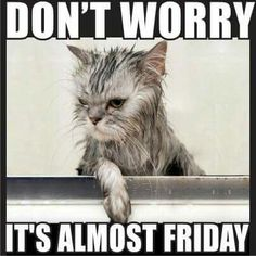 It's almost Friday quotes quote days of the week thursday thursday quotes friday. almost friday Tgif Meme, Funny Thursday Quotes, Thursday Meme, Tgif Funny, Funny Friday Memes, Its Friday Quotes, Friday Humor, Funny Memes, Hilarious