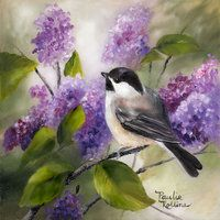 Chickadee in the Lilacs 5 x 5 by PaulieRollins