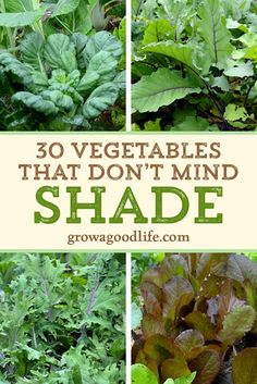 Do you have an area of your garden that is shaded part of the day? There are many vegetables that grow in shade. Some even thrive when sheltered from the intense rays from the summer sun. Read on for over 30 vegetables that will grow in partial shade. Vegetable Garden Planner, Backyard Vegetable Gardens, Veg Garden, Vegetable Garden Design, Edible Garden, Easy Garden, Garden Art, Garden Shrubs, Garden Pests