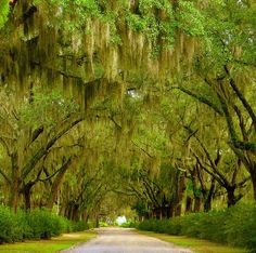 This looks like it would be the long driveway to a southern mansion <3