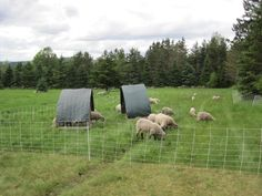 Sheep Shelters
