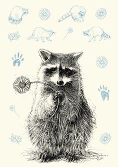 Racoon Greetingcard Postcard Recyclingpaper by KatharinaRot Raccoon Drawing, Raccoon Tattoo, Raccoon Art, Art And Illustration, Raccoon Illustration, Animal Drawings, Art Drawings, Illustrator, Arte Sketchbook