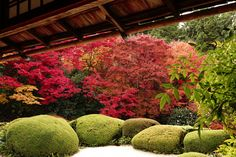 Autumn wabi-sabi. Beautiful garden colours by Sunnywinds on flickr