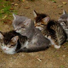Awwww I love me some kittens!