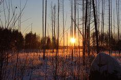 Dawn, Reflexion, Natur, Holz, Baum, Sonnenuntergang