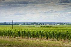 Drumul vinului Saint Nicolas de Bourgueil