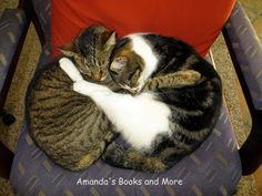 Cats Like to Cuddle and More on this #WW with #Linky ~ Amanda's Books and More