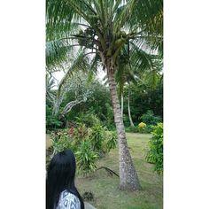 #Fiji #bulla #coconuttree #memories #Island  #beautiful #instasky  #view #instagood  #photooftheday  #goodtime #hot #life #photography  #tourism #travel  #memory #instagramer  #coralCoast by beatriz_salazar