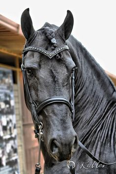 Horses that are always thinking… Photo by Kevin Kidder… http://www.facebook.com/pages/Kidder-Design-Group/99503536924