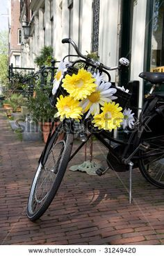 Symbol of Amsterdam, bicycle decorated with white and yellow flowers by Ekaterina Pokrovsky
