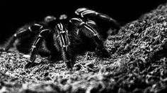 A picture shot in a dark environment at Butterfly Creek (Auckland, New Zealand) #hairy #spider #family #dayout