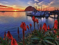 ~~ Tranquil Harbor ~~
