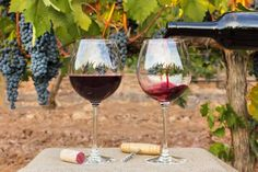 Poor weather in Europe and wildfires in California have damaged thousands of grapes. Rv Trip Planner, Travel Planner, The Wine Shop, Organic Wine, Italian Wine, Moldova, Wine Festival, Wine Making, Red Wine