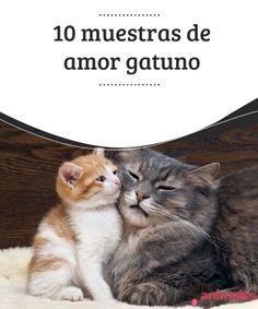 10 muestras de amor gatuno  Aunque son animales muy independientes que necesitan su espacio y lo buscan, también saben mostrar a los humanos elamor gatunoque pueden ofrecer. #amor #gatuno #muestra #curiosidades