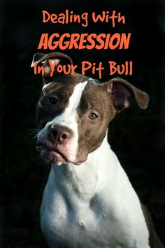 Pitbull Puppy Training Tips: Dealing With Aggression. Check out our pitbull puppy training tips for dealing with aggression in your pit pup. Remember, any dog can become aggressive, so these tips work for all! Puppy Training Tips, Training Your Dog, Potty Training, Pitbull Training, Training Quotes, Leash Training, Training School, Training Schedule, Brain Training