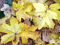 fallen leaves texture - Google Search