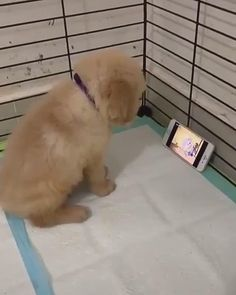 Enjoy new funniest and very cute compilation of the week about try not laugh funny animals' life video. Dogs are awesome animals. Cute Puppy Videos, Cute Animal Videos, Cute Puppy Gif, Dog Videos, Cute Funny Dogs, Cute Funny Animals, Cute Pets, Cute Baby Dogs, Cute Dogs And Puppies