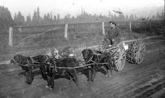 Dog cart from the Bernardi Family Photo collection, via @Oregon State Library. #GoatCart
