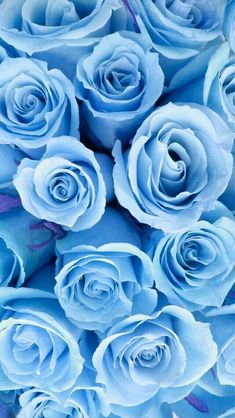 Light blue roses macbook wallpaper, iphone 5 wallpaper, new wallpaper, nature wallpaper, Tumblr Wallpaper, Wallpaper Hd Flowers, Iphone Wallpaper Black, Android Phone Wallpaper, Flower Backgrounds, Aesthetic Iphone Wallpaper, Aesthetic Wallpapers, Nature Wallpaper, Wallpaper Backgrounds