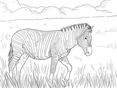 Click To See Printable Version Of Burchells Plain Zebra Coloring Page
