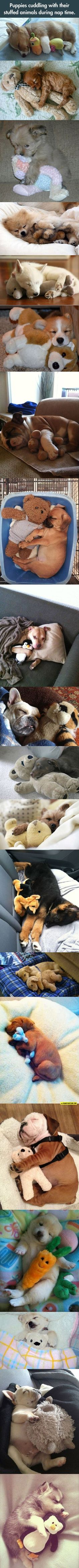 Best Naps You'll See Today