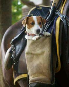 Saddle UP hehe :) puppy