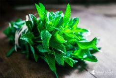 00325P-grow-mint-herb-uses-medicinal