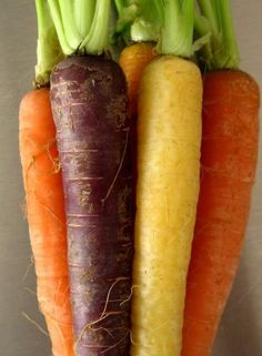 Carrots used to be purple before the 17th century, almost all carrots cultivated were purple. The modern day orange carrot wasn't cultivated until Dutch growers in the late 16th century took mutant strains of the purple carrot, including yellow and white carrots and gradually developed them into the sweet, plump, orange variety we have today.